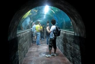 Alunos no aquário